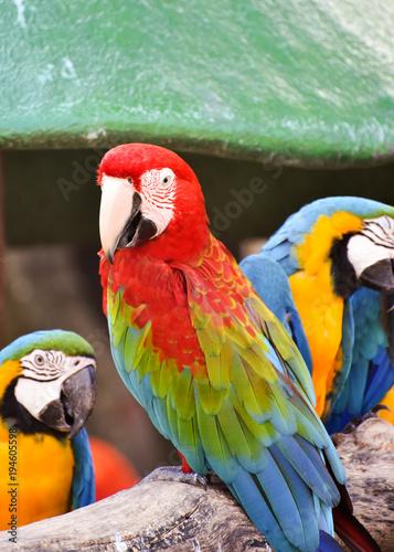 Aluminium Papegaai macaw
