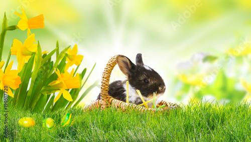 Wielkanocny królik na Wielkanocnej łące, Easter jajkach i daffodils