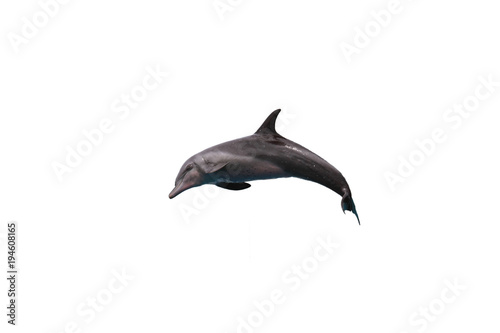 Fotobehang Dolfijn Bottlenose dolphin jumping to sky on white isolated background