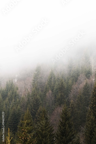 Fotobehang Grijze traf. foggy forest trees landscape