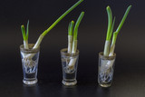 three glasses with spring onions, black background - 194647566