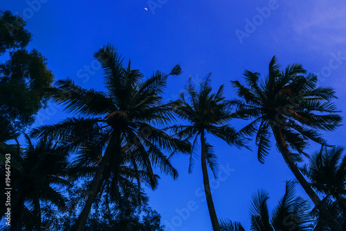 Foto op Canvas Donkerblauw silhouettes of palm trees on the background of blue evening sky with moon
