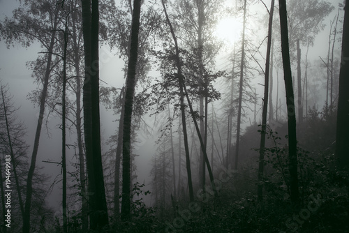 Aluminium Betoverde Bos Misty forest in fog background, silhouettes of trees