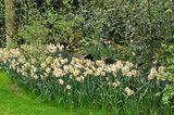 Pormenor de jardim - 194651102