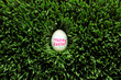 Single Happy Easter egg hidden in grass