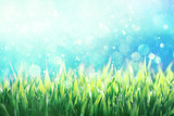 Dew covered green grass against blue sky background - 194663949