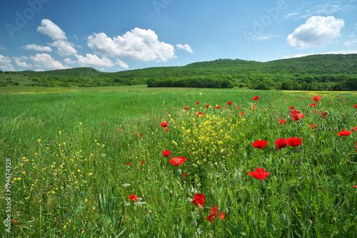Aluminium Lente Spring flowers in meadow.