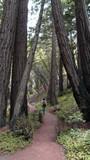 California Hike - 194677590