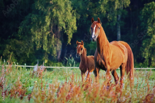 Aluminium Paarden Arab