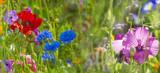 summer meadow - 194683377