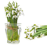 snowdrop flowers on a white background - 194685971
