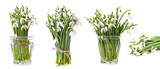 snowdrop flowers on a white background - 194686137