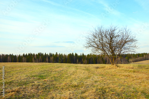 Aluminium Lente Springtime.Empty field with lonely growing bare tree.Gentle soft blue color of sky at sunset.Countryside landscape.Moscow region,Russia.