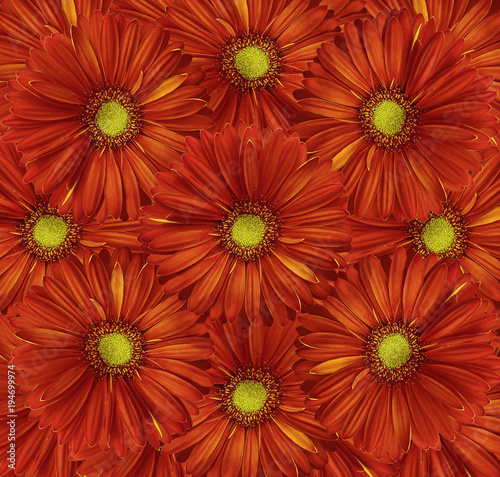 Fotobehang Rood traf. Floral red background. A bouquet of flowers from red-yellow gerberas. Close-up. Nature.