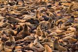 Cape Cross Seal Colony outside Swakopmund, Namibia - 194717145