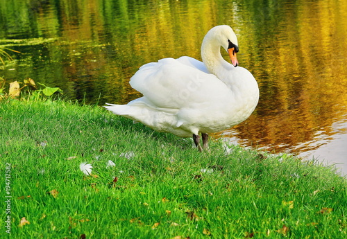 Aluminium Zwaan Netherlands. Lake. Swan.