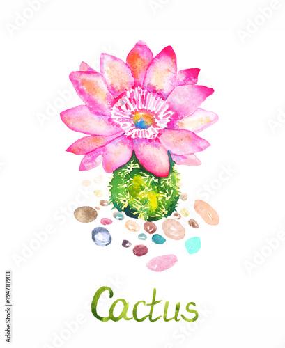 kaktus-z-rozowe-kwiaty-i-kolorowe-kamienie-wokol-recznie-malowane-akwarela-ilustracja-z-napisem-na-bialym-tle