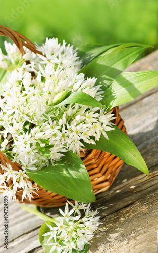 Leinwanddruck Bild Wild garlic, Bärlauch, Blätter, Blüten, Körbchen, Textraum, copy space