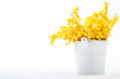 bouquet of yellow mimosa flowers standing in a bucket