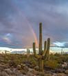 Arizona Saguaro cactus  scenery with rainbow in background