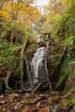 cascada desde abajo bosque otoño