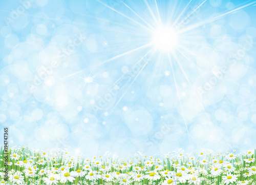 Staande foto Lichtblauw Vector summer nature background, daisy flowers field.