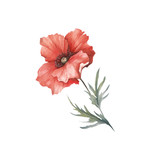 The image of a poppy. Hand draw watercolor illustration. - 194747751
