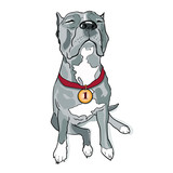 Black Dog Closeup  Gold Medal On Neck Sitting Staffordshire Terrier Dog  Golden Award On Red Ribbon    Dog Is Proud Of Himself   Dogs Wall Sticker