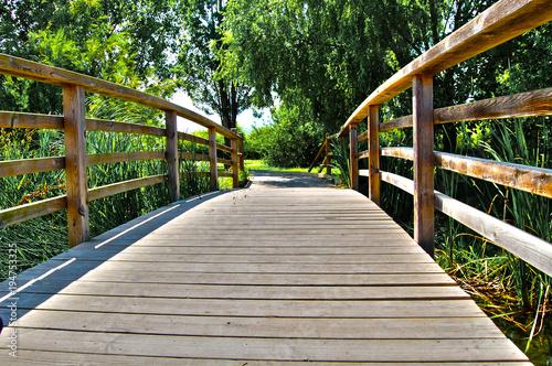Tuinposter Weg in bos Pasarela o puente de madera