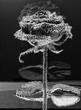 Rose  en noir et blanc dans les bulles du dioxyde sur fond noir  - 194768525