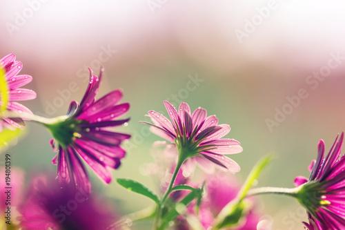 Aluminium Galyna A. Flowers