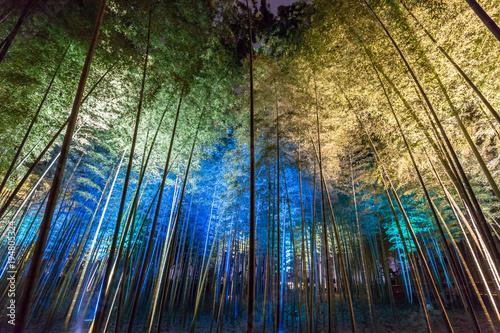 Fotobehang Bamboe 水戸偕楽園 竹林のライトアップ