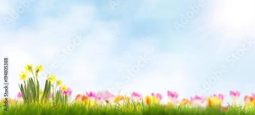 Wiosna krajobraz z kolorowymi kwiatami i niebieskim niebem.