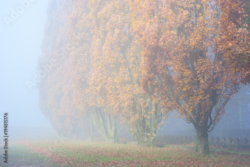 Foto op Canvas Wit Schöne herbstliche Landschaft mit Bäumen im Nebel