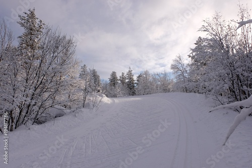 Plexiglas Lavendel Skiing trace in winter forest