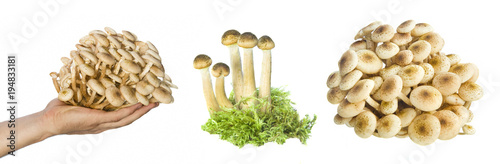 Fotobehang Verse groenten set of fresh mushrooms isolated on white background