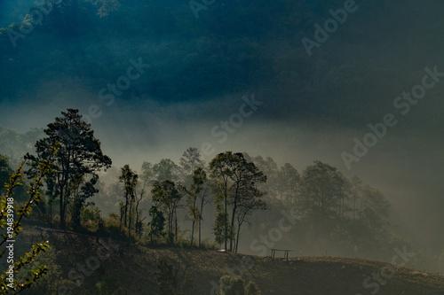 las i góra z mgłą, na północy Tajlandii