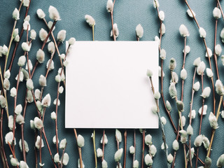 Pussy willow branches and blank card. Concept of Springtime