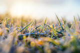 Morning frost on green grass in the rays of the rising sun close-up selective focusing - 194853722