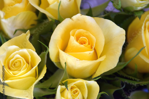Ein Strauß gelber Rosen zur Frühlingszeit