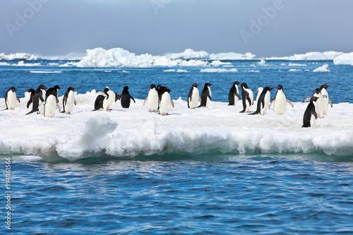 Fotobehang Pinguin Penguins on an iceberg