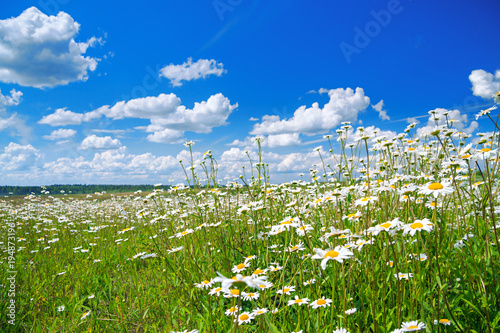 Aluminium Lente spring rural landscape with a flowering flowers on meadow