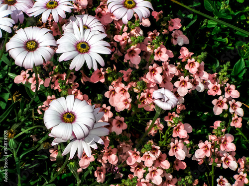 Bunch of white and pink flowers