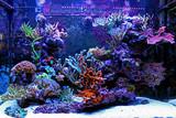 Saltwater reff aquarium - 194879957