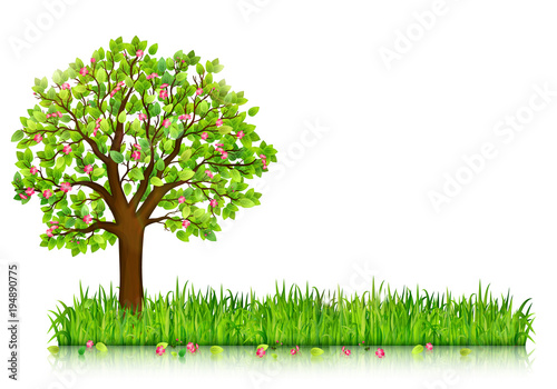 Spring nature background with blossoming tree and green grass vector