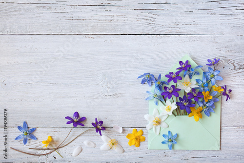 Fototapeta Forest spring flowers in an envelope on a wooden background