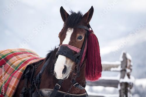Aluminium Paarden Horse in snow