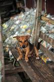 angeketteter Hund vor einem Berg leerer Schnapsflaschen - 194899340
