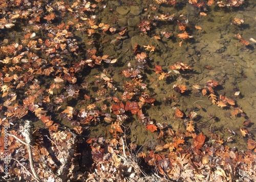 sunlit fallen leaves in creek