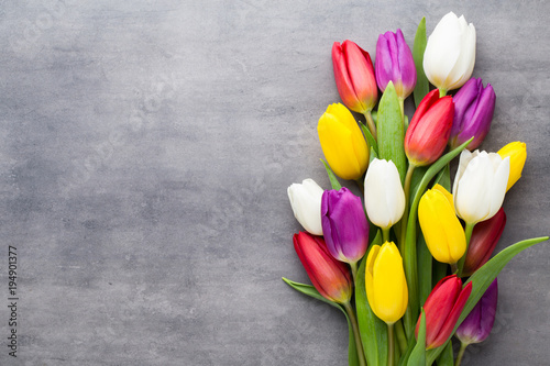 Fototapeta Multicolored spring flowers, tulip on a gray background.